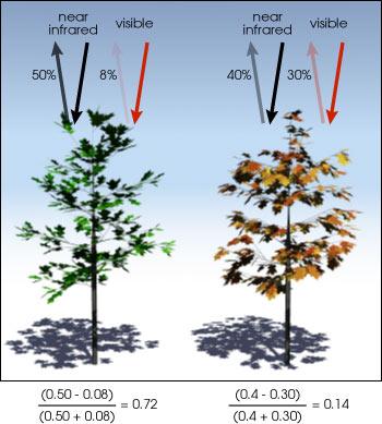 Gezonde vs groene bomen