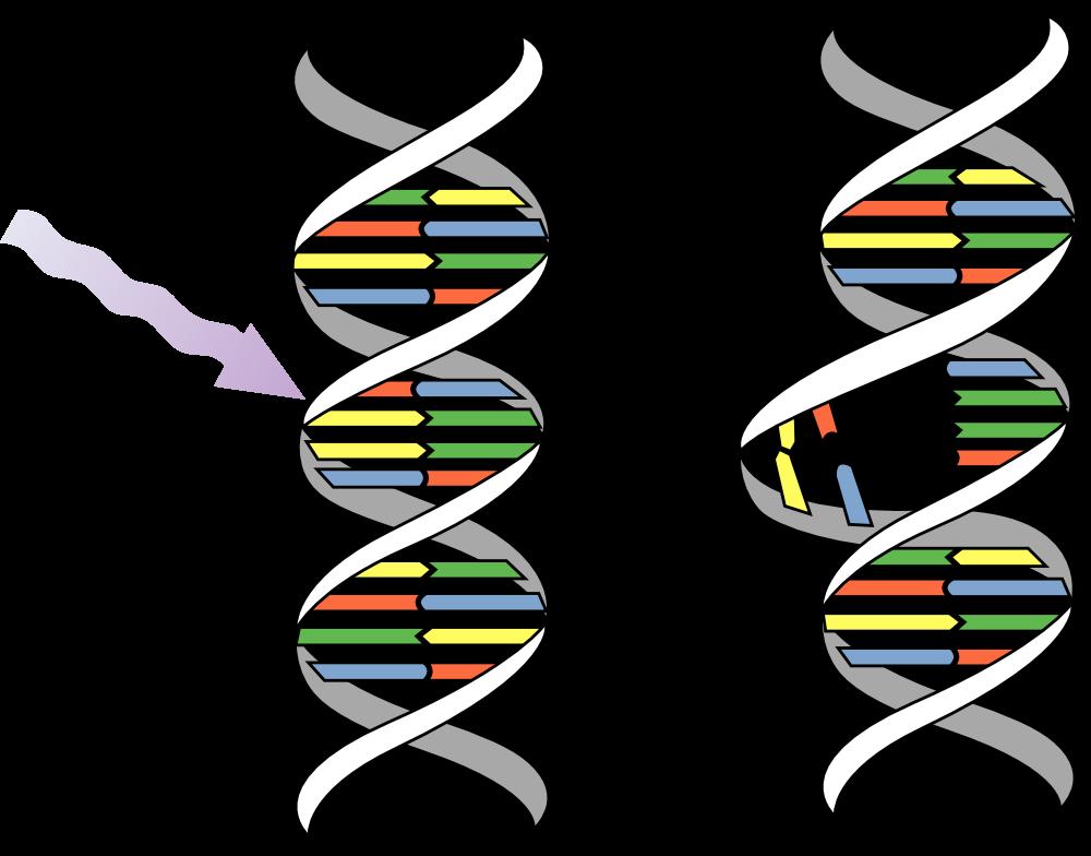 DNA-mutaties